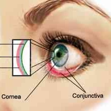 drawing of anatomy of the layers of tears on the eye